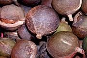 Орех макадамия очень полезен и по вкусу напоминает фундук. // yakhnov.ru