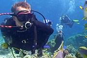 Остров Лизард расположен близ Большого Барьерного рифа. // lizardisland.com.au