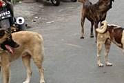 На Бали – 540 тысяч бродячих собак. // bali-travel-life.com