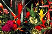 Растениями теперь можно полюбоваться и ночью. // highlandheliconia.com