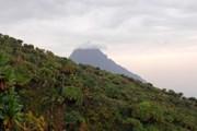 Природа Руанды уникальна. // iStockphoto