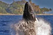 Посмотреть на китов на остров Мауи приезжает множество туристов. // hawaiilifeofluxury.com