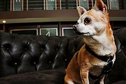 Отели предпочитают небольших собак. // time.com
