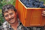 Вина Аргентины вобрали в себя все лучшие традиции Европы. // Travel.ru