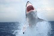 Изменение направления течения стало причиной подхода акул к берегу. // nationalgeographic.com