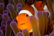 С гибелью кораллов погибнут и многие другие обитатели моря. // iStockphoto