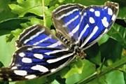 Бабочки в музее летают свободно. // sadbabochek.ru