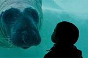 Новый океанариум откроется в Биаррице 16 апреля. // museedelamer.com
