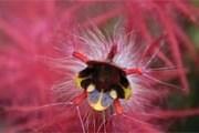 Парк полон удивительных представителей флоры и фауны. // mashpilodge.com