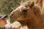 """""""Пустынное ранчо"""" предлагает отдохнуть на природе. // chatru.com"""