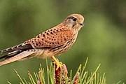 Туристы смогут понаблюдать за множеством видов птиц. // rias-aldeia.blogspot.com