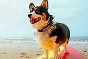 В Хорватии появился пляж для собак. // coastalliving.com