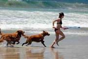 Впервые в истории Кипр разрешает посещать пляжи с собаками. // adventures.com