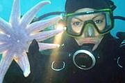 У берегов Фарерских островов – разнообразный подводный мир. // faroedive.fo