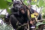 Лес Гишвати – достопримечательность Руанды. // desmoinesregister.com