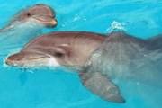 Дельфины нуждаются в спасении. // worldwildlife.org