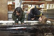 Ученые восстанавливают крупнейший корабль викингов. // Dansk.ru