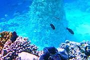 Основание коралловой ели // anantara.com