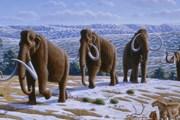Когда-то здесь жили мамонты. // Wikipedia
