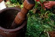 Терере - национальный напиток Парагвая. // paraguayguaranies.com