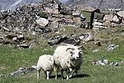 Природа и история Гренландии интересны туристам. // greenland.com