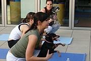 Постояльцы отеля могут заниматься йогой с собаками бесплатно. // hotelchatter.com