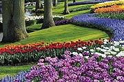 Парк Кёкенхоф – самый известный в Нидерландах. // keukenhof.nl
