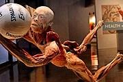 Зрители могут увидеть, что происходит с человеческим телом при совершении тех или иных действий. // prague-hotel-operator.com