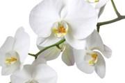 В парке будут выращиваться миллионы орхидей. // iStockphoto / Daniel Kaesler