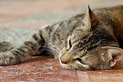 За кормление бездомных животных грозит штраф. // iStockphoto / cringuette