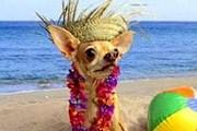 Пляж для собак откроется в Гдыне. // inmycommunity.com.au