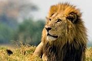 Посетители смогут понаблюдать за животными с безопасного расстояния. // wantextra.com