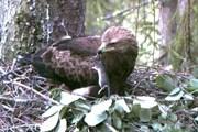 Лучше всего наблюдать за птицами в октябре. // daba.gov.lv