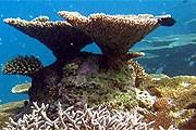 Фрагмент искусственного рифа отеля. // anantara.com