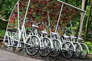 Велосипеды можно взять напрокат бесплатно. // park.sokolniki.com