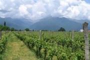 В Кахетии угостят домашним вином. // gruzya.info