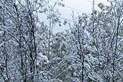 Юг Австралии засыпан снегом. // weatherchannel.com