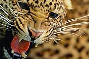 Коста-Рика защищает своих животных. // ta1.ru