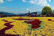 На фестивале будут представлены тысячи хризантем. // festival.changwon.go.kr