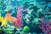 Фрагмент аквариума отеля Burj Al Arab // Jumeirah Group