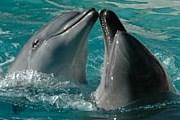 Туристы смогут полюбоваться дельфинами. // cubatravel.cu