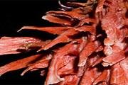Spondylus - это название рода местных моллюсков. // olgafisch.com