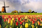Участникам нужно будет угадать число тюльпанов. // tripsite.com