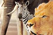 Чучела животных на выставке можно трогать руками. // hianimal.com