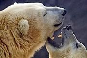 Пражский зоопарк работает бесплатно. // kids.aol.com