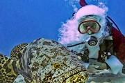 Подводного Санту можно увидеть в зоопарке. // masslive.com