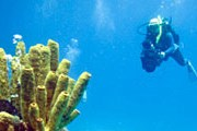 Рифы Андаманского моря привлекают множество дайверов. // GettyImages