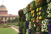 Могольские сады доступны в течение месяца. // India-forums.com