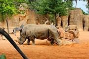 В парке полностью воссоздана естественная среда обитания животных. // Travel.ru