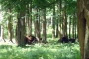 Парк займет территорию площадью 25 тысяч гектаров. // tula.rodgor.ru